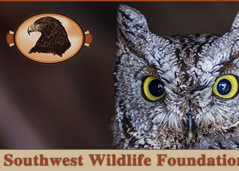 Southwest Wildlife Foundation of Utah