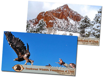 Send a Postcard about your Donation!