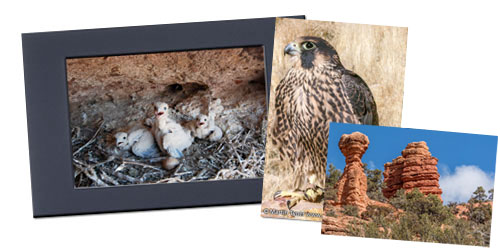 Purchase Wildlife Photos